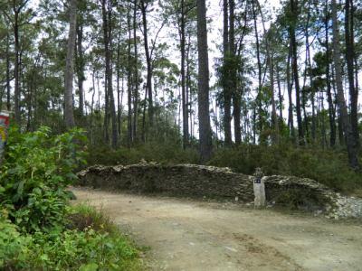 Camino de Santiago: ¿Cuántos km son un día?