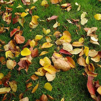 Gran limpieza de otoño: 14 consejos