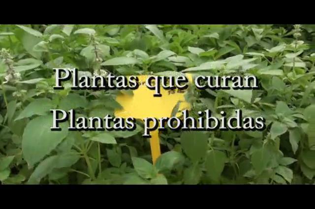 Plantas que curan, plantas prohibidas – Naturaleza CinemaSlow